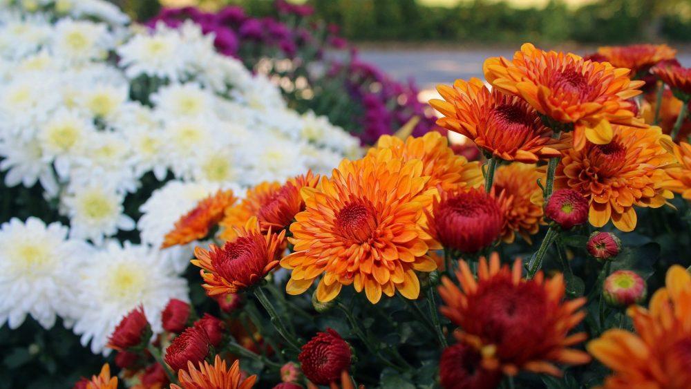 Gardenmaster Kroeze - Beesd - Plant nu je planten voor het voorjaar