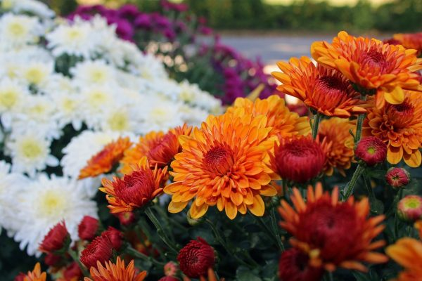 Mooie tuin in het voorjaar? Plant nu uw planten!